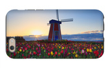 Tulip Field and Windmill iPhone 6 Case by  Lantern Press