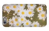 Daisies iPhone 6s Plus Case by Jena Ardell