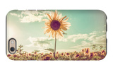 One Sunflower Rising above the Rest iPhone 6 Case by  soupstock