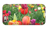 Tulips iPhone 6s Case by  Lantern Press