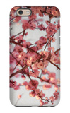 Cherry Blossoms I iPhone 6 Case by Susan Bryant