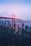 Foggy Golden Gate Bridge and Wildflowers, San Francisco Photographic Print by Vincent James