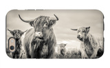 Highland Cattle iPhone 6 Case by Mark Gemmell