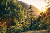 Afternoon Light Eagle Creek Trail - Columbia River Gorge Oregon Photographic Print by Vincent James