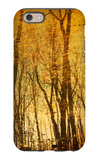 Tree Reflections iPhone 6 Case by Irene Suchocki