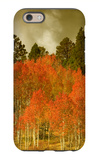 Portrait of Aspens in Autumn iPhone 6 Case by Vincent James