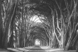Afternoon Light Cypress Tree Road, Poiint Reyes National Seashore Photographic Print by Vincent James