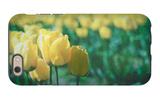 Yellow Tulip Field iPhone 6 Case