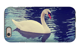 Mute Swan, Cygnus Olor, Single Bird on Dark Water Toned with a Retro Vintage Instagram Filter Effec iPhone 6 Case by  graphicphoto
