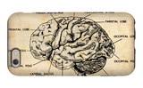 Vintage Brain Map Anatomy iPhone 6 Case by  NaxArt
