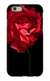 Red Ranunculus iPhone 6 Case by Magda Indigo