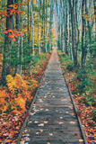 Wild Gardens Path, Acadia National Park, Maine Photographic Print by Vincent James