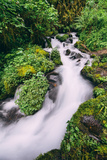 Lush Spring Creek, Columbia River Gorge, Oregon Photographic Print by Vincent James