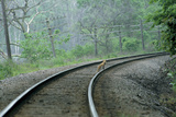 A Red Fox Stands on Train Tracks in the Forest Photographic Print by Michael Forsberg