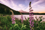 Mount Hood Wildflower View at Trillium Lake, Oregon Photographic Print by Vincent James