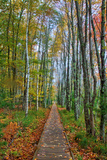 The Wild Gardens of Acadia in Autumn, Maine Photographic Print by Vincent James