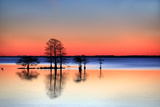 Silhouetted Bald Cypress Trees in Water at Sunset Photographic Print by Robbie George