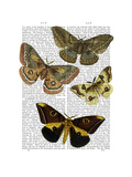 Moth Plate 3 Premium Giclee Print by  Fab Funky