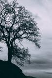 Tree in the Sky, Black and White Mount Diablo, Walnut Creek Danville Fotografisk trykk av Vincent James