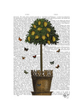 Lemon Tree Premium Giclee Print by  Fab Funky