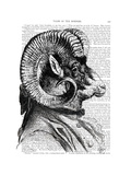 Bighorn Sheep in Suit Posters by  Fab Funky