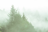 Fog Art Impressions Nature Detail Photographic Print by Vincent James