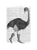 Ostrich in Boots Prints by  Fab Funky