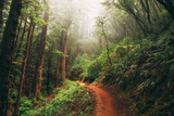 Amazing Misty John Muir Woods Coastal Trail, San Francisco Bay Area Photographic Print by Vincent James