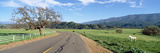 Horses, Santa Ynez Mountains in Spring, Santa Barbara, California Photographic Print by Panoramic Images