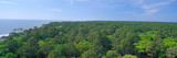 Native Trees at Hunter Island Near Hilton Head, South Carolina Photographic Print by Panoramic Images