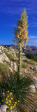 Tree at Anza Borrego Desert State Park, Borrego Springs, California, Usa Photographic Print by Panoramic Images