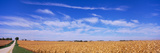 Dirt Road Along Corn Fields, Minnesota, Usa Photographic Print by Panoramic Images