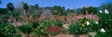 Garden, Ojai, California Photographic Print by Panoramic Images