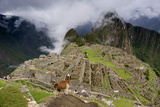 A Llama Overlooks the Ruins of Machu Picchu Photographic Print by Jim Richardson