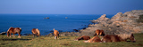 Celtic Horses on the Shore, Finistere, Brittany, France Photographic Print by Panoramic Images