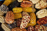 Multicolored Corn Photographic Print by Jim Richardson