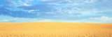 Empty Golden Field Photographic Print by Panoramic Images