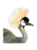 Watercolor Crested Crane Prints by Naomi McCavitt