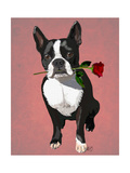 Boston Terrier with Rose in Mouth Prints by  Fab Funky