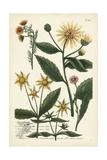 Saffron Garden I Posters by  Weinmann