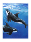 Under Sea Whales II Premium Giclee Print by Tim O'toole