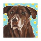 Dlynn's Dogs - Get Your Ball Posters by Dlynn Roll