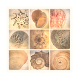 Coral Seashells Premium Giclee Print by Honey Malek