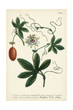 Antique Passion Flower III Prints by  Weinmann