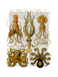 Octopus and squid Premium Giclee Print by  Fab Funky