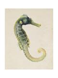Sea Dweller VI Prints by Grace Popp