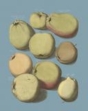 Orchard Harvest II Giclée-tryk af A. Poiteau
