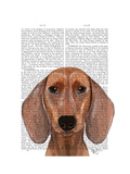 Dachshund Illustration Plain Premium Giclee Print by  Fab Funky