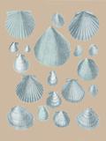 Shell Study III Giclée-tryk af A. Poiteau
