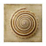 Sepia Shell V Premium Giclee Print by Judy Stalus